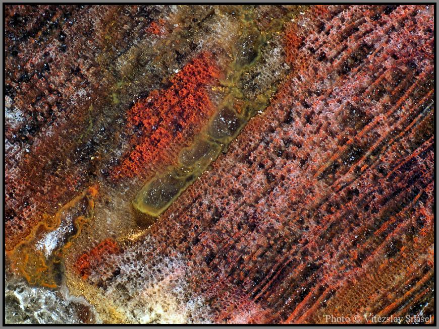 Křemen (var. Zkamenělé Dřevo)